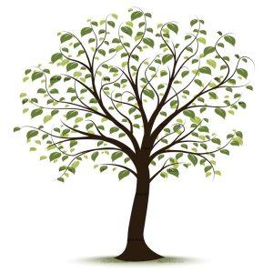 royalty-free-tree-clip-art-83838